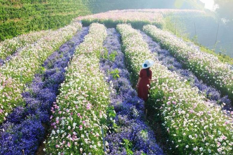 Cánh đồng hoa Đà Lạt