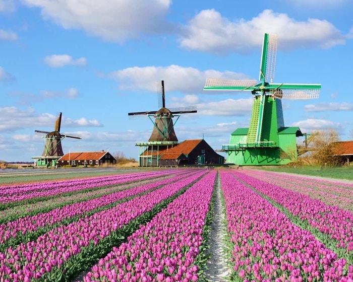 Làng cối xay gió Zaanse Schan