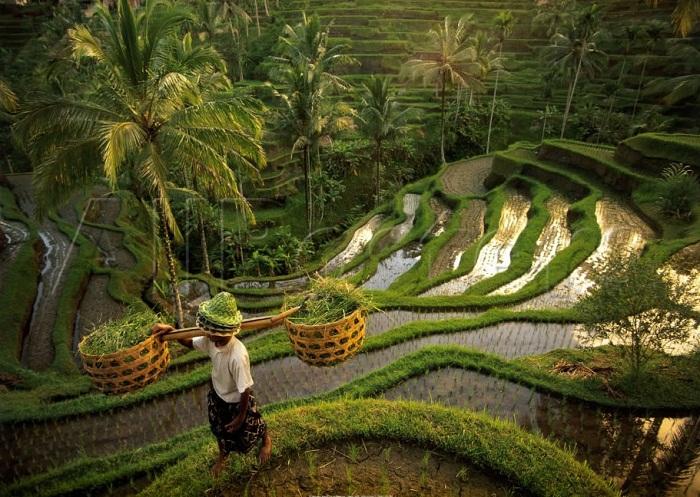 Tìm sự bình yên tại ngôi làng Ubud