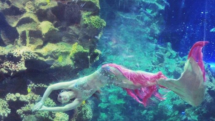 Thưởng thức những chương trình biểu diễn dưới nước vô cùng hấp dẫn