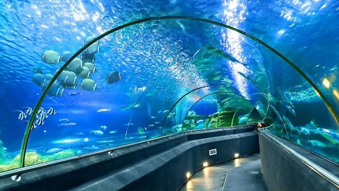 Khám phá thế giới đại dương với hệ sinh thái vô cùng phong phú