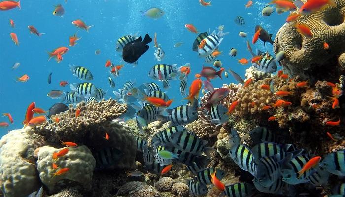 Khám phá đại dương đầy màu sắc