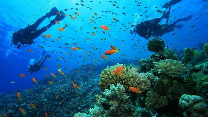 Tự do lặn biển trong 30 phút