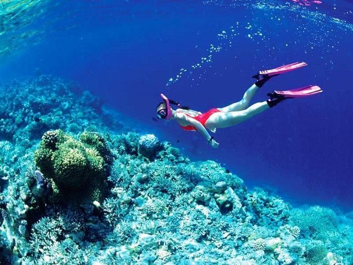 Tìm hiểu đời sống dưới đáy biển