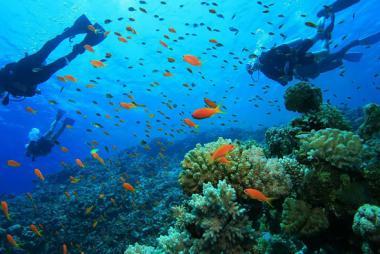 Tour lặn ngắm san hô ở Đảo Lý Sơn