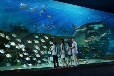 Tour Singapore - Vé Tham Quan Thuỷ Cung Sea Aquarium 4N3Đ, KS 3, 4*