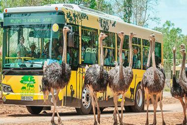 Vé Vinpearl Safari Phú Quốc