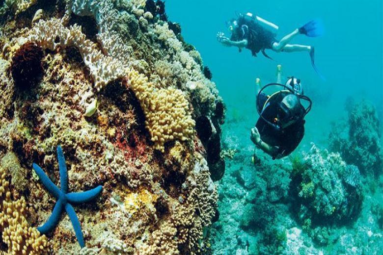 Tour Lặn Biển Và Câu Cá Bắc Đảo 1 Ngày