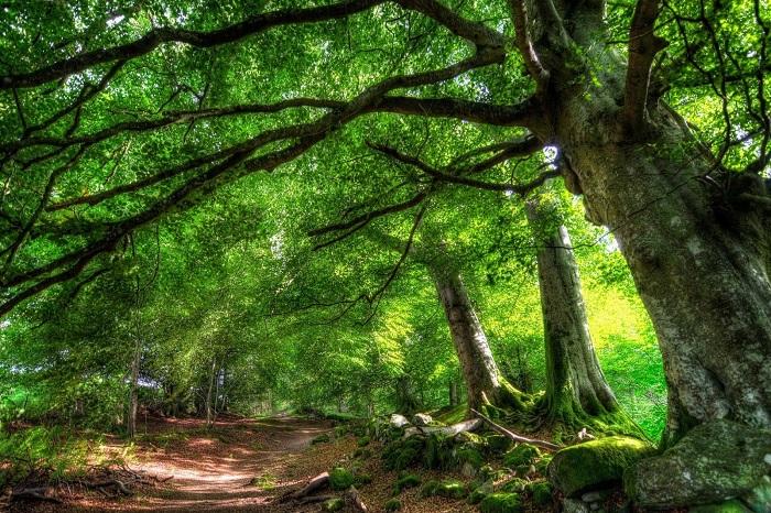 Du lịch Phú Quốc: Rừng Quốc gia Phú Quốc
