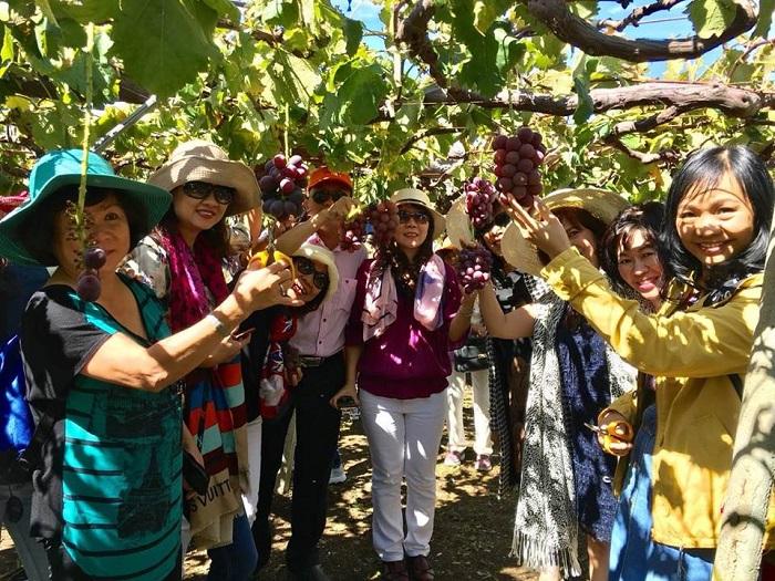 Đoàn khách thăm Nhà Vườn và hái trái cây tại Nhật