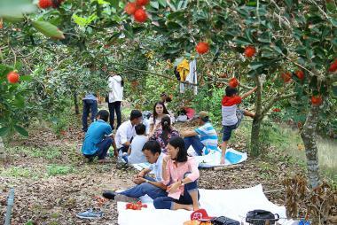 Tour Tham Quan Thưởng Thức Trái Cây Tại Vườn 1 Ngày
