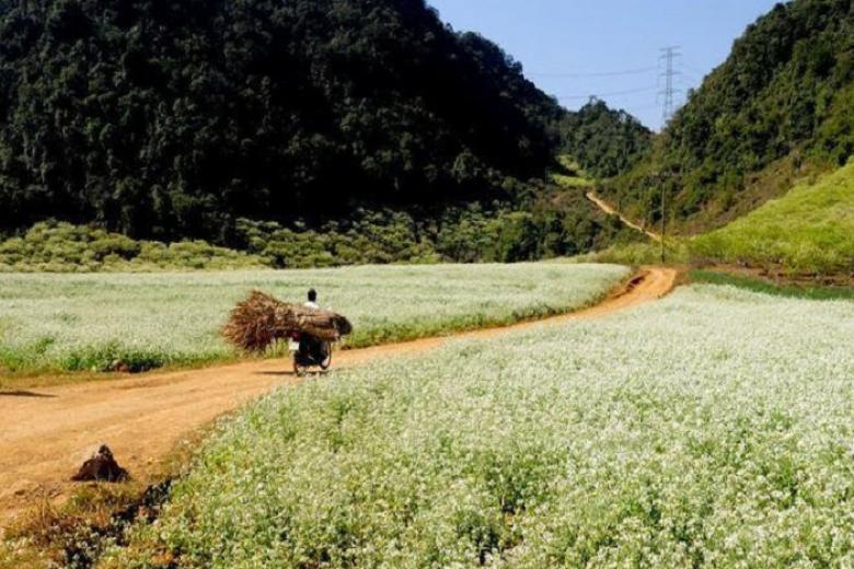 Tour Hà Nội - Mộc Châu 2N1Đ