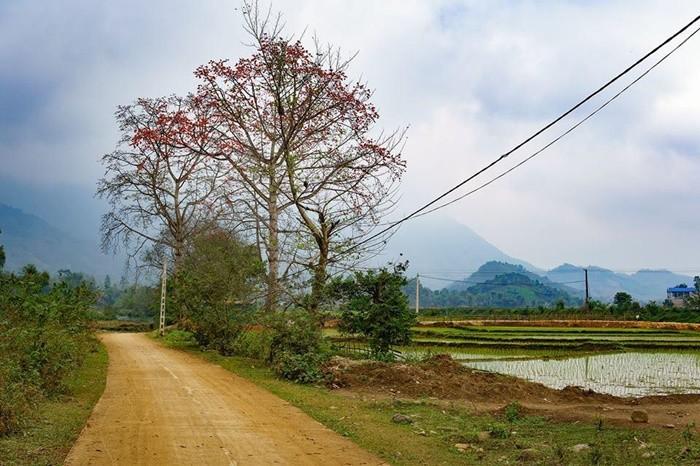 Bản Ú Phú Thọ như bức tranh thôn quê ở miền Bắc thời xưa