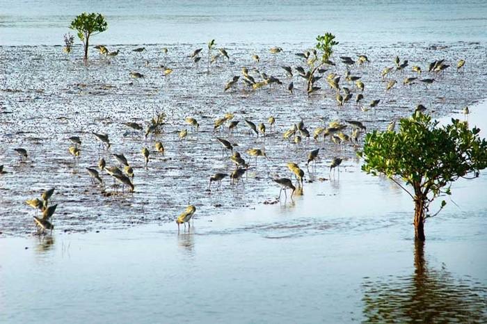 Vườn quốc gia Xuân Thủy nơi bảo vệ cửa Ba Lạt Nam Định