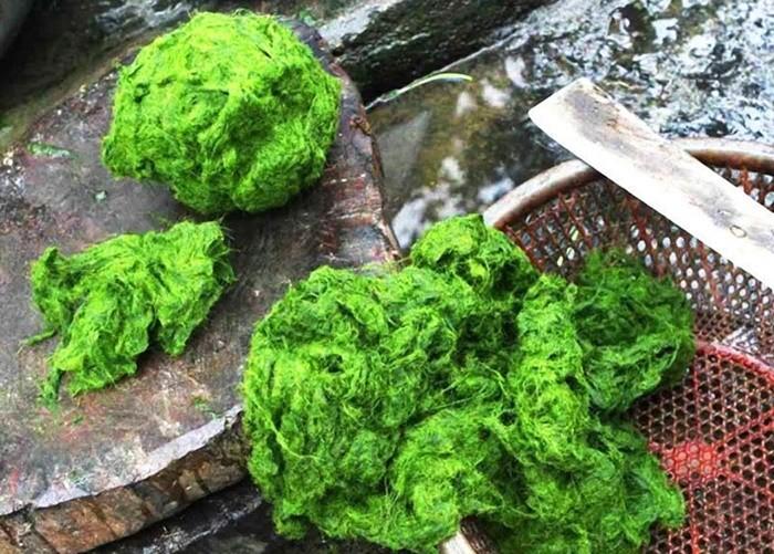 Đặc sản Thanh Sơn - rêu đá người Mường