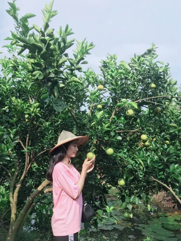 Tourism Con Son, Can Tho - fruit garden