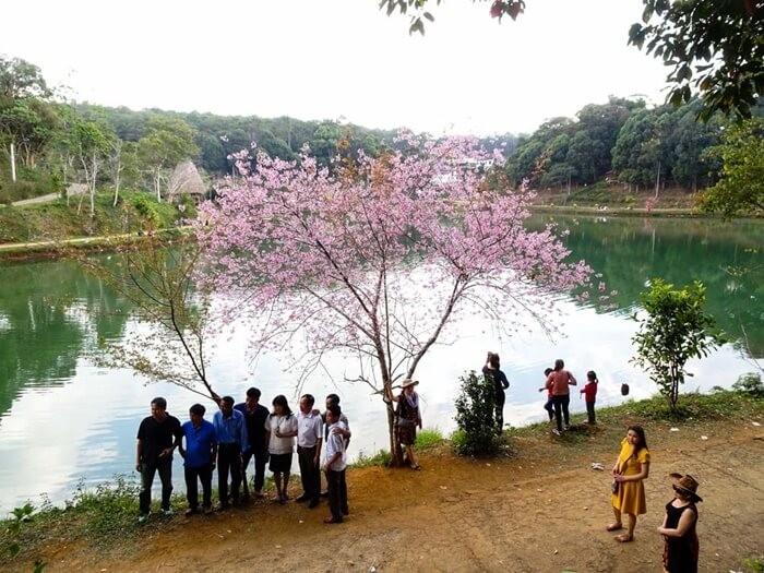 Hồ Đăk Ke - check-in tại hồ bên sắc hoa đào nở rộ