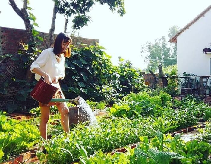 Homestay in Kon Tum garden is a green color
