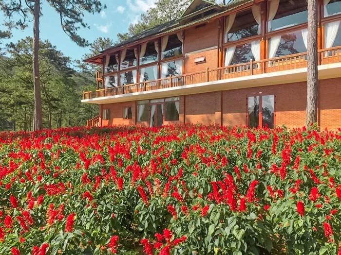 Khu du lịch Đà Lạt Tiên Cảnh - sắc đỏ của hoa nổi bật cả vùng trời