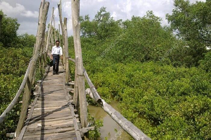 Khu sinh thái Cồn Lu - Cồn Ngạn - cầu gỗ