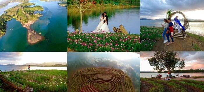 Thời điểm đẹp nhất đẹp check-in sống ảo bên vườn hoa Long Loi