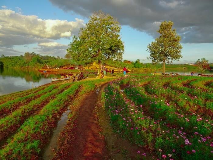 Vườn hoa Long Loi ở đâu Kon Tum?