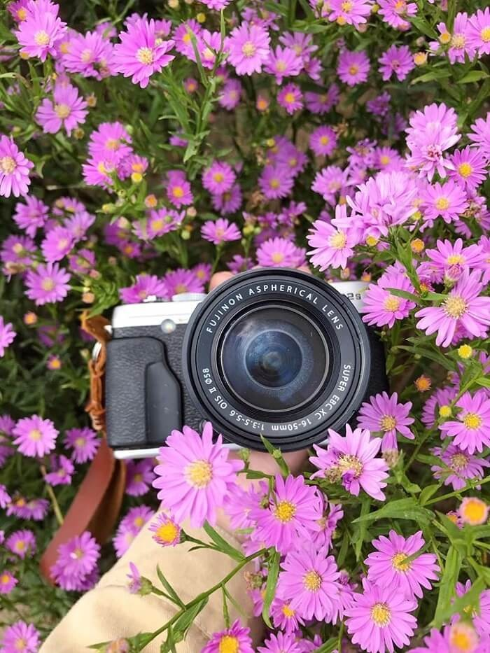 Vườn hoa thạch thảo Cần Thơ thơ mộng