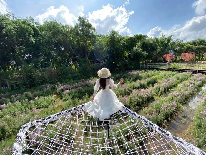 Vườn hoa thạch thảo Cần Thơ - võng lưới