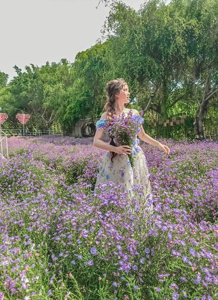 Vườn hoa thạch thảo Cần Thơ phân luống đi rộng rãi