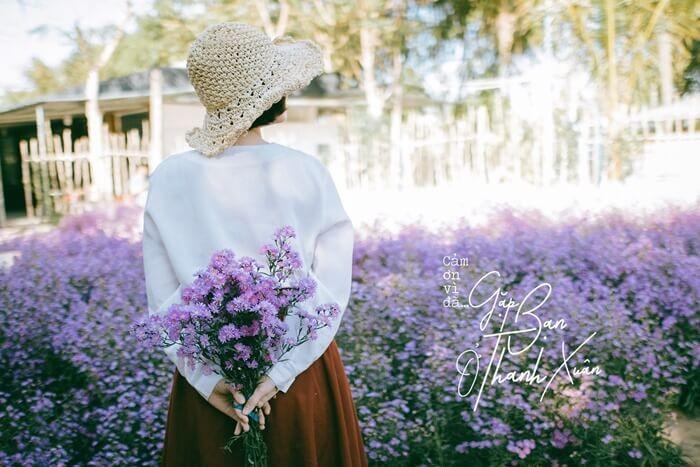 Vườn hoa thạch thảo Cần Thơ - đẹp mộng mơ
