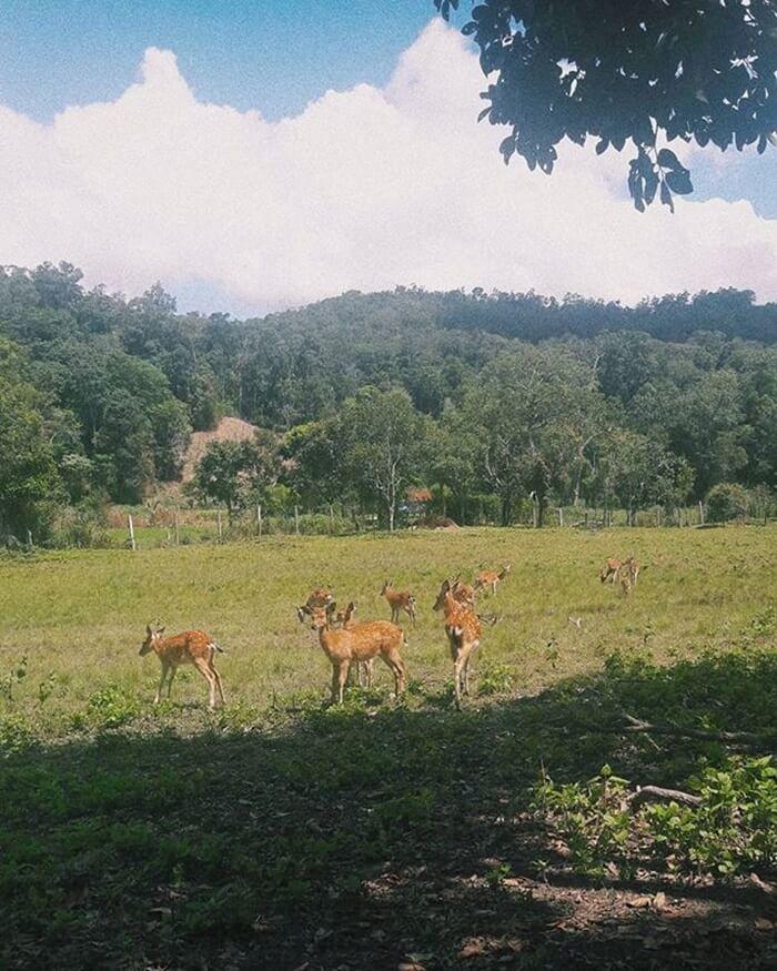 Vườn quốc gia Kon Ka Kinh - tham quan vườn thực vật, động vật