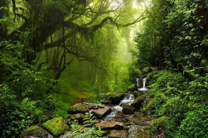 Khám phá những cây cổ thụ ngàn năm tại rừng Muir San Francisco