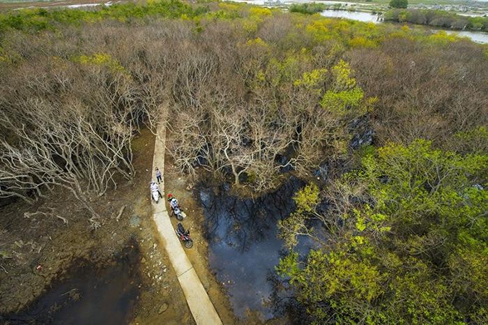 Những rặng cây ngập mặn bao phủ tựa như bức tường dày ở rừng ngập mặn Rú Chá.