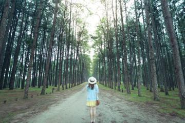 Du lịch Thái Lan khám phá rừng thông Ban Wat Chan