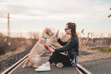 Đừng quên kinh nghiệm đưa thú cưng đi du lịch rất cần thiết