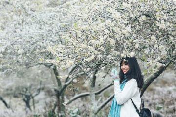 Đẹp ngỡ ngàng mùa hoa mận Mộc Châu - Sơn La