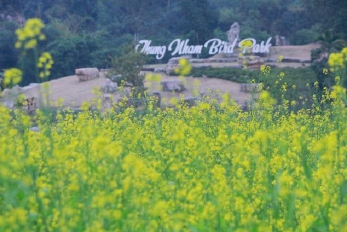 "The field of mustard flowers in the movie ""Golden Boy"" -vienam-journey"
