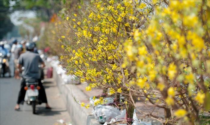 Chợ hoa Tết ở Sài Gòn - chợ hoa Hậu Giang đông đúc