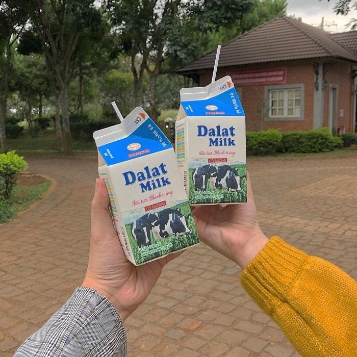 địa điểm du lịch Đà Lạt cho gia đình - sữa tươi DaLat Milk Farm