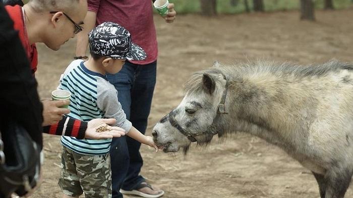 địa điểm du lịch Đà Lạt cho gia đình - thăm sở thú Zoodoo