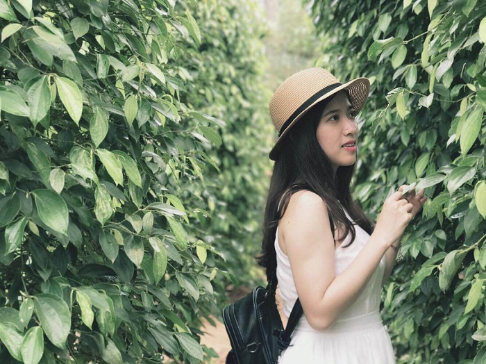 Du lịch Phú Quốc Tết Nguyên Đán - vườn tiêu Phú Quốc