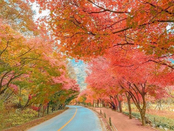 đường mòn đi bộ Hàn Quốc - ngắm cảnh núi Naejangsan