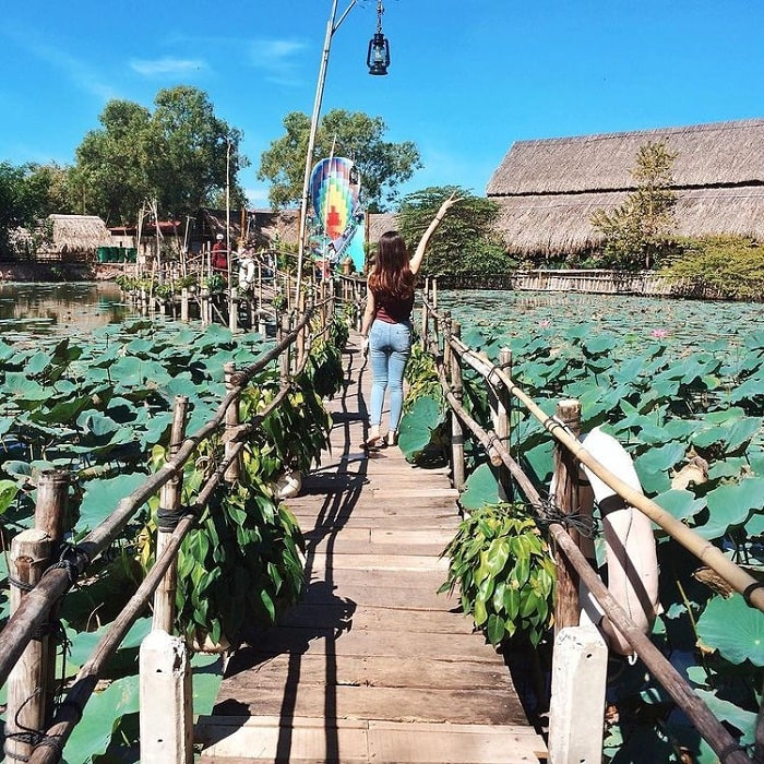 lotus pond - the highlight at Long Trung eco-tourism area in Tay Ninh
