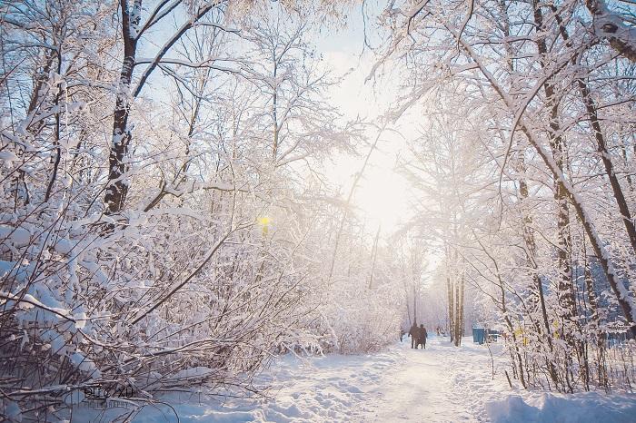 rừng ven moscow chụp ảnh mùa đông đẹp ở Nga
