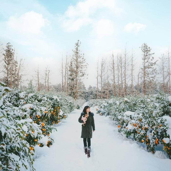 kinh nghiệm du lịch Hàn Quốc tháng 2 - thăm thú cảnh đẹp