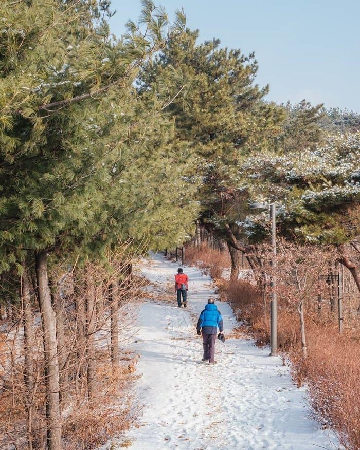 kinh nghiệm du lịch Hàn Quốc tháng 2 - trải nghiệm ngắm cảnh đẹp