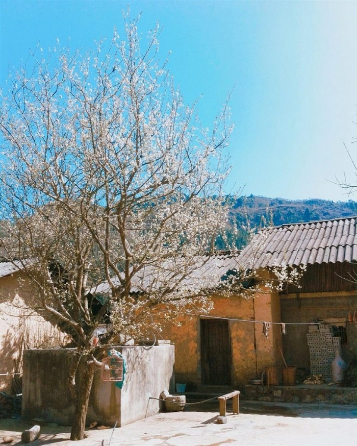 Nhà của Pao Hà Giang vào mùa xuân