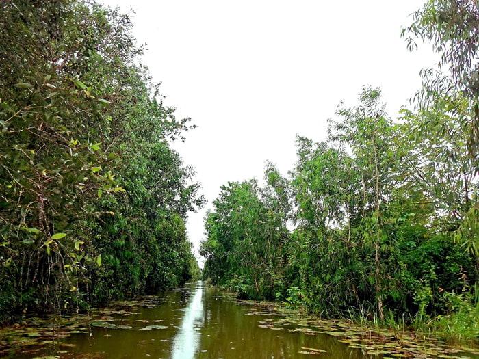 Khám phá rừng tràm Tân Tuyến An Giang - danh mục rừng ngập nước bảo tồn