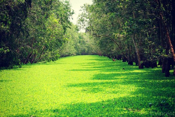 Khám phá rừng tràm Tân Tuyến An Giang - thuộc huyện Tri Tôn