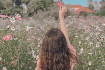 Những vườn hoa đẹp ở An Giang cứ bước vào là có ảnh Tết xịn xò